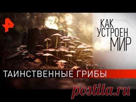 """Таинственные грибы. """"Как устроен мир"""" с Тимофеем Баженовым (25.11.19)."""
