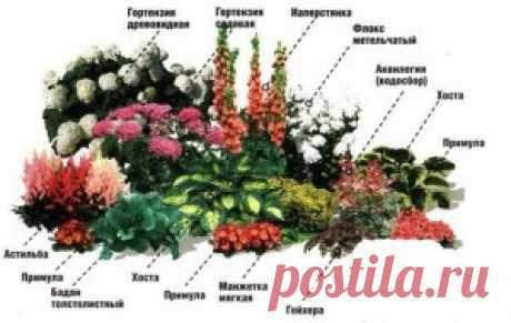 11 готовых схем самых красивых цветников с указанием всех растений. | Для дачников.ру