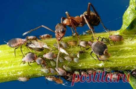 Вас достали муравьи? А вот я забыл о них навсегда. Рассказываю, что я для этого сделал. | Жизнь хорошА! | Яндекс Дзен