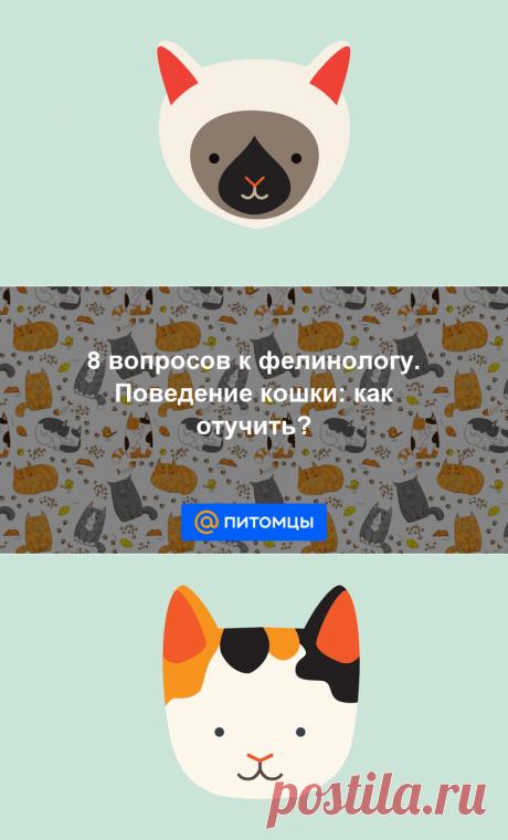 8 вопросов к фелинологу. Поведение кошки: как отучить? - Питомцы Mail.ru