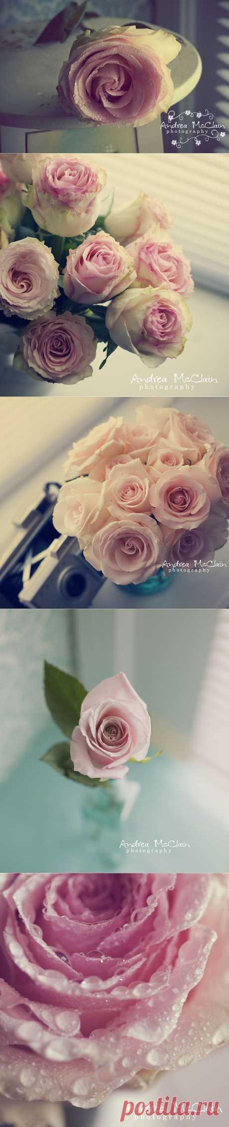 Цветы от Андреа Макклейн.