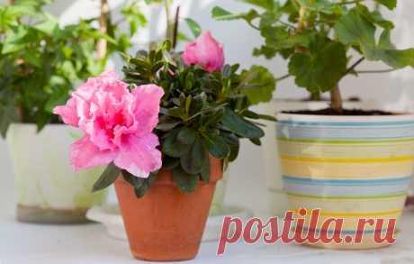 Какие аптечные средства заставят цвести домашние растения | Лайфхаки и полезные советы | Яндекс Дзен