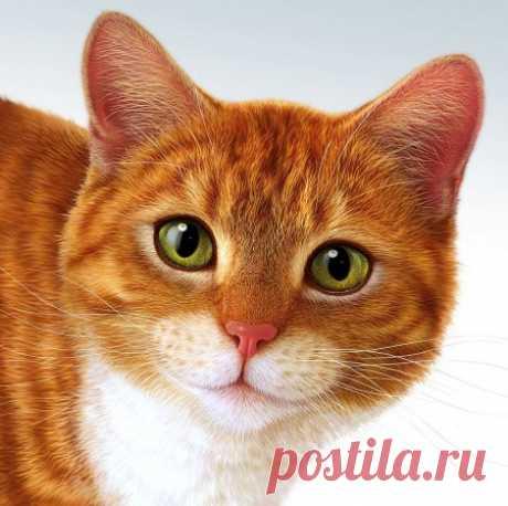 Рисованные кошки. — Виртуальное логово Мифического Чудовища! :: @дневники: асоциальная сеть