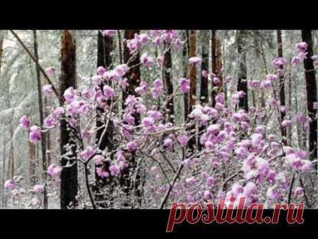 Ференц Лист Грезы любви - YouTube Ф. Лист Грезы любви... Зима...Нежность, любовь, гармонию и чистоту несет прекрасная музыка ...