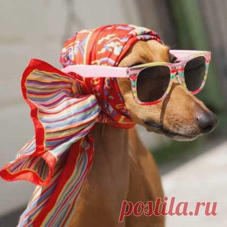 Знакомьтесь с Джоуи, собакой, которая является профессиональной моделью (13 фото) . Тут забавно !!!