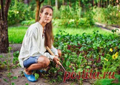 Почему сад и огород делает нас счастливее: 5 причин. Как создать органический сад иогород Как получать от дачи удовольствие