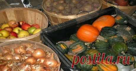 I store vegetables in the winter only this way! And I recommend to all! — Kopilochka of useful tips