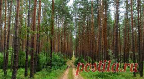 Необычный гриб нашли в лесу в Барановичском районе. Фотофакт Большой боровик, на котором ножками вверх растут два маленьких, жительница Барановичей нашла в лесу недалеко от деревни Тартаки Барановичского района.
