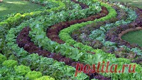 Смешанные посадки овощей: на грядке, в теплице, схемы, видео. Совместимость овощных культур.