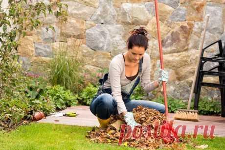 Осенние работы в саду и огороде: что делать на участке в сентябре, октябре, ноябре