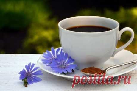 Цикорий — сорняк, который заменит кофе и поможет похудеть. Сбор и хранение. Как приготовить? Противопоказания. Фото — Ботаничка.ru