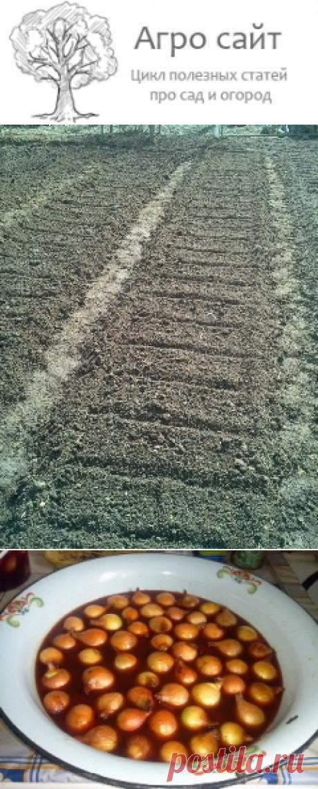 Как правильно садить лук-севок весной: выращивание на репку