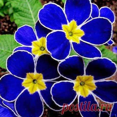 Цветы, каких вы никогда ещё не видели