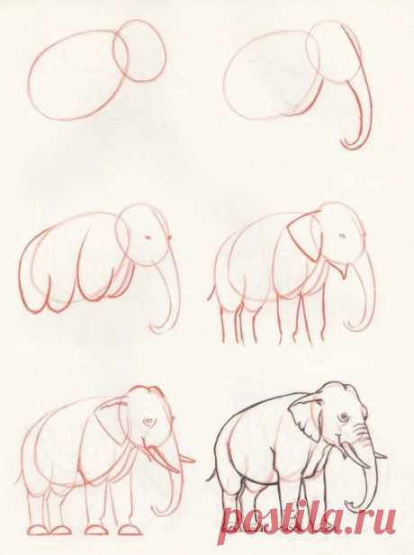 «Рисунки карандашом для начинающих: животные — это коллекция простых и понятных поэтапных уроков рисования, с помощью которых каждый желающий сможет быстро научится рисовать» — карточка пользователя N* в Яндекс.Коллекциях