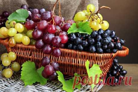 Обрезка винограда осенью. И пара приемов для повышения плодоношения — Садоводка