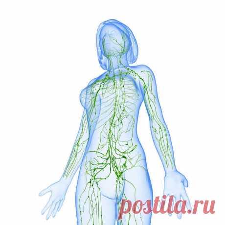 Не допускайте застоя лимфы — это губительно для здоровья - Интересная Идея Двигаться кровь по артериям заставляет мышечный сосудистый орган — сердце, движение крови по артериям и венам обеспечивается — сердечно клапанным строением, далее строением сосудистой и артериальной системы. Лимфатическое русло не имеет подобного «привода». Движение лимфы медленное и обеспечивается посредством мышц. Главная мышца для привода в движение лимфы — диафрагма. Это своего рода «сердце» лимфосистемы. При […]
