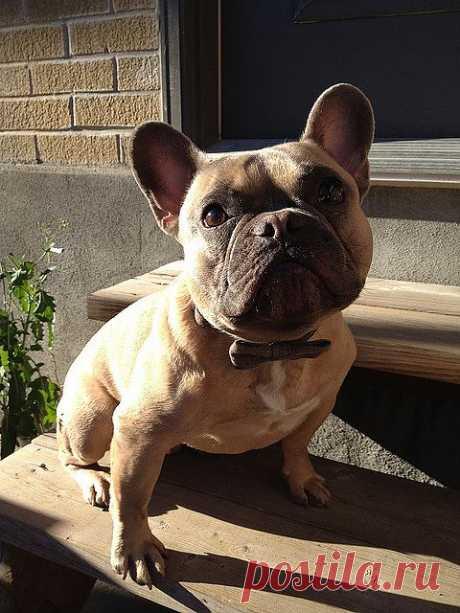 Pups — Cute Overload