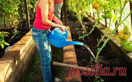 Чем подкормить помидоры, чтобы помидоры были крупными и созревали быстрее