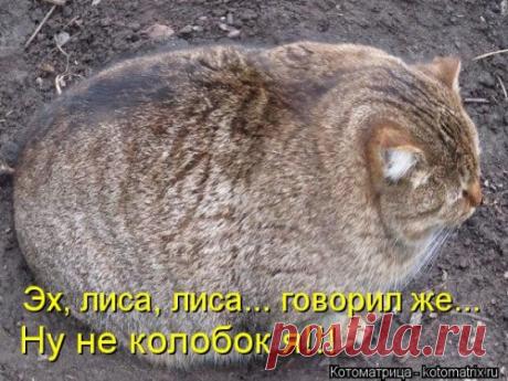 arjan08@mail.ru parwani