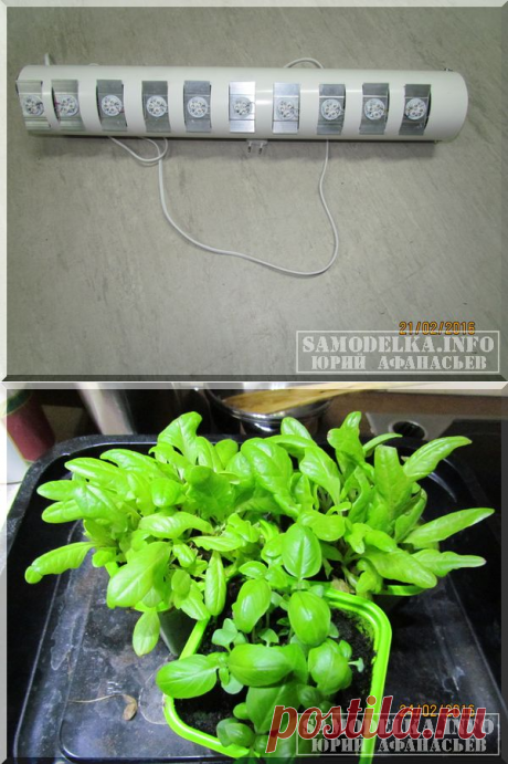 Сделай сам: светодиодная лампа для растений