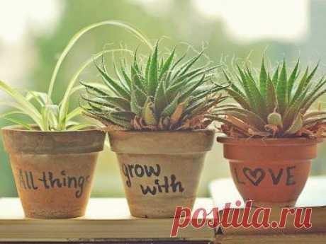 10 растений, которые принесут в Ваш дом любовь - ЖУРНАЛ СО ВКУСОМ