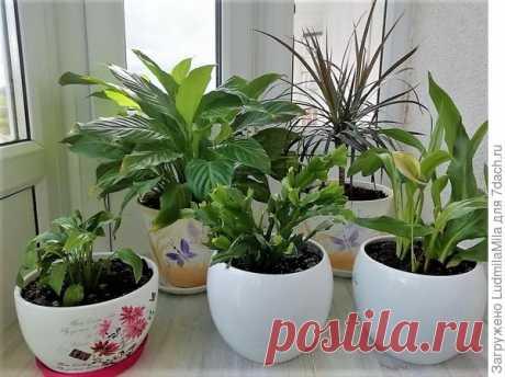 Все для комнатных растений: от грунта до опрыскивателя