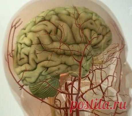 5 методик очищения сосудов головного мозга / Будьте здоровы