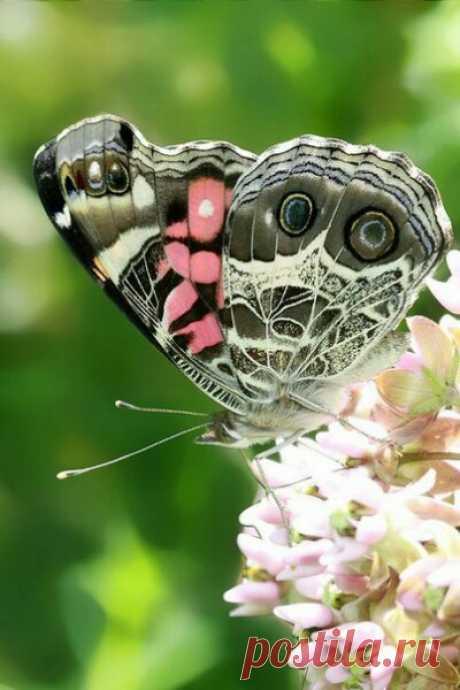 Бабочки не видят свои крылья. Они не понимают насколько они прекрасны, но остальные видят их красоту. С людьми тоже так бывает.
