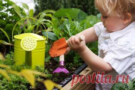 Золотые советы огородникам: защита от вредителей без