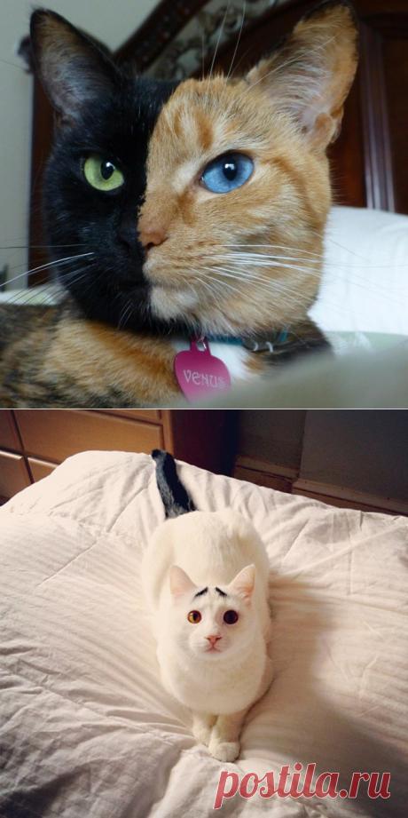 Кошки, над окрасом которых природа постаралась (12 фото)