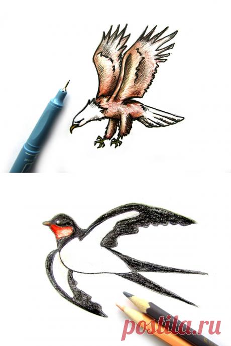 Как нарисовать птицу поэтапно. Покажу 6 способов рисования разных птиц | Разукрашка |