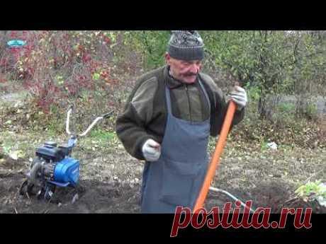 Посадите малину именно ТАК и ВСЕГДА будете с урожаем!!! - YouTube