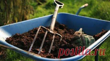Малина. Чем подкормить осенью после сбора урожая и обрезки.