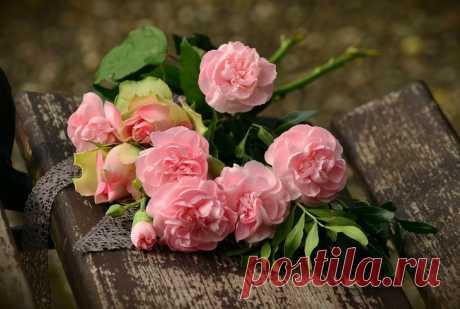 Как разводить розы из черенка Роза ― представитель растений рода Шиповник. Этот удивительный по красоте цветок еще с