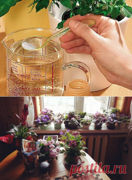 Несколько советов для ухода за комнатными растениями...
