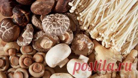 Учёные рассказали, как грибы защищают мозг пожилых людей от возрастных нарушений - Вести.Наука