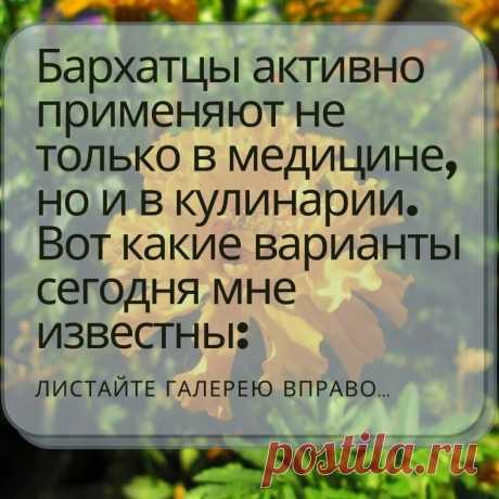 Бархатцы, они же «бархотки», «Чернобривцы» и «Тагетесы» очень популярный цветок. А знаете ли вы как ещё кроме выращивания на клумбах можно применять этот милейший цветок?   Садовый рай 🌱   Яндекс Дзен