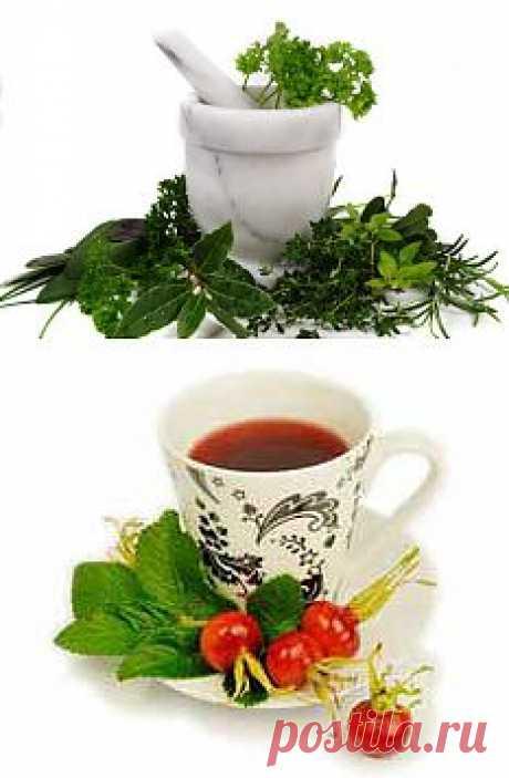 >> Травник - справочник лекарственных растений и трав