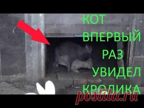 Кот увидел в первый раз кролика - YouTube