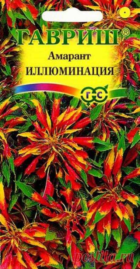 """Амарант """"Иллюминация"""""""