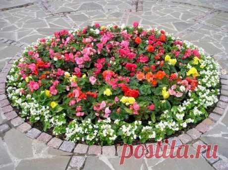Клумбы и цветники - в чем разница между клумбой и цветником