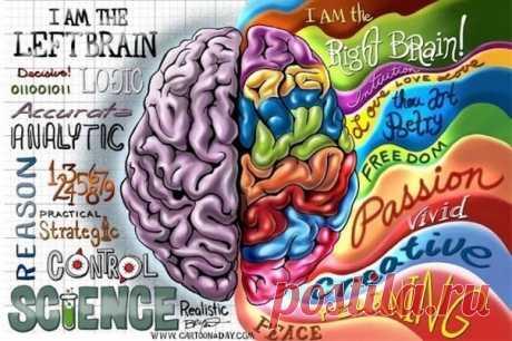 Почему и как нужно совершенствовать полушария мозга?