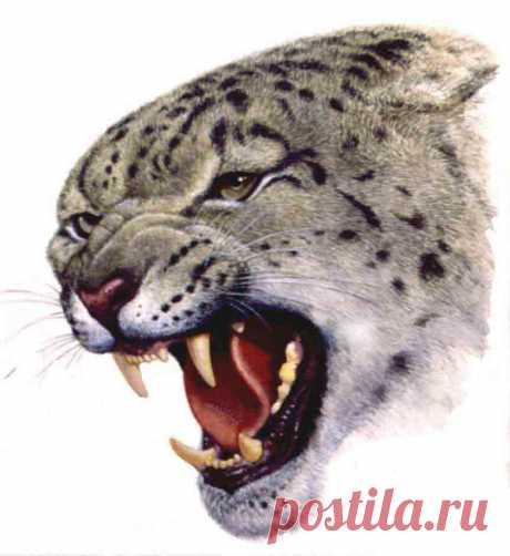Мужские эскизы Оскал животных - Студия художественной татуировки PRO-tattoo