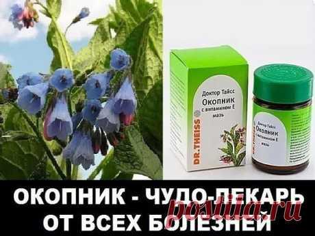 """Лекарственная трава """"ОКОПНИК""""--лекарь от многих болезней!"""