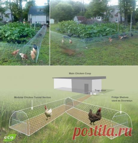 DIY Chicken Tunnel for Backyard | BeesDIY.com