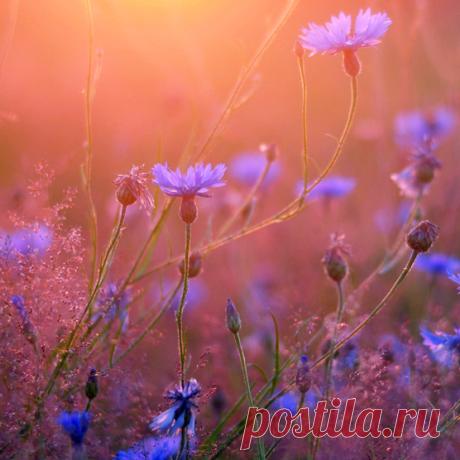 Flor del camino