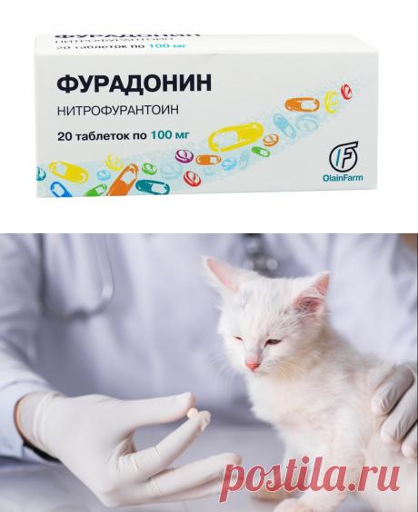Фурадонин для кошек - инструкция по применению