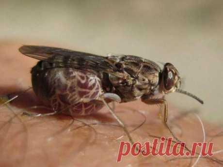 Растения, отпугивающие мух и комаров Вездесущие мухи и комары могут испортить отдых на свежем воздухе. Эти маленькие насекомые не только гудят над головой, но и несут много опасных заболеваний и бактерий. Как экологически, просто и быстр...