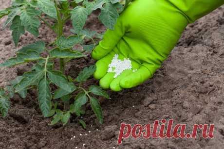 Подкормка томатов в период завязи плодов: лучшие средства и правила применения