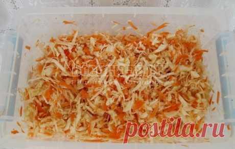 Капуста маринованная быстрого приготовления за 1 день - быстрый рецепт с фото | Все Блюда